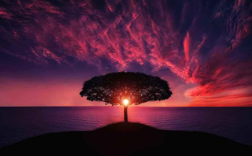 A Tree's Memory